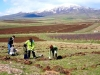 Another 58,200 trees planted by Armenia Tree Project