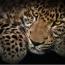 Пять видов животных, находящихся на грани вымирания в Армении