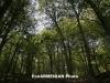 Անտառներում հրդեհների վտանգը մեծացել է. Նախարարությունը հորդորում է զգոն լինել