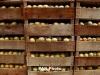 Նախարարություն. 2015-ին ՀՀ-ից արտահանվել է մոտ 35 տոննա պտուղ-բանջարեղեն