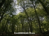ՀՀ-ում կտնկվի Արևմտյան Հայաստանի համայքները խորհրդանշող 10 անտառ՝ մոտ 550.000 ծառով