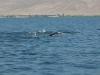 Հայ էքստրեմալները լողալով անցել են Սևանի 10 կմ-ը՝ առանց հանգստի