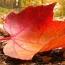 Астрономическая осень наступит 23-го сентября
