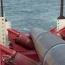 «Газпром» отказался от половины мощностей «Турецкого потока»