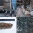 Из глубин древности: Десять самых значимых артефактов, обнаруженных в Армении