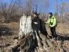 1000-ից ավելի ապօրինի հատված ծառ, այս անգամ՝ Ստեփանավանում