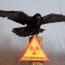 Բնական աղետներ. Հետևեք կենդանիների վարքագծին