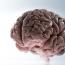 Факты о мозге: Вселенная, которую мы носим в себе