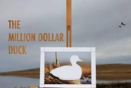 "Animal Planet, Lionsgate acquire ""Million Dollar Duck"" Slamdance doc"