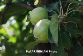 Հայկական ստարտափի ստեղծած տեխնոլոգիան նպաստում է գյուղատնտեսության արտադրողականության աճին