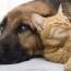 Исследование: Собаки любят хозяев в шесть раз сильнее кошек