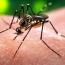 Venezuela reports first Zika-related deaths
