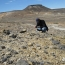 Scientists discover major Jurassic fossil site in Argentina