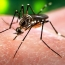 New study says Zika virus might cause severe neurological disorder