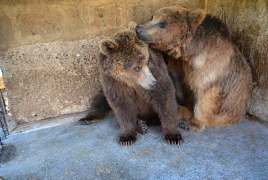 Sickened bears from Armenia get new home in Romania