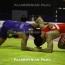 ՀՀ-ն ներկայացնող ըմբիշ Կետոևը՝ վարկանիշային մրցաշարի ոսկե մեդալակիր