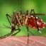 First Zika commercial test approved for emergency use
