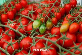 Глава Минсельхоза РА: Турецких помидоров на рынках Армении нет