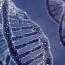 «Кошмарная» бактерия и революционный метод лечения ВИЧ
