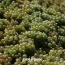 В Армении появится фонд виноградарства и виноделия