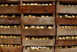 55 грузовиков с армянскими овощами и фруктами отправились на пароме  в Россию
