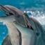 Гениальный разум дельфинов