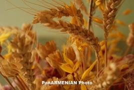 Урожай зерна Ширакской области Армении в 2016-м году превысит прошлогодние показатели