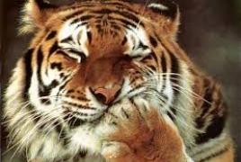 В Ереване обсуждают вопросы сохранения дикой природы