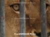 Երևանի կենդանաբանական այգու վերակառուցման 2-րդ  փուլը մեկնարկել է