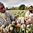 Afghanistan opium production soars 43 percent: UN