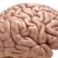 Американские ученые обнаружили биологическую основу эффекта плацебо