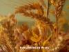 ՔԿ. Ցորենի վաճառքի մասով ՊՆ-ից յուրացում չի եղել, քրգործի հարուցումը մերժված է