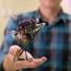UC Berkeley researchers build a wall-jumping robot
