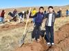 «Էյ Թի Փին» ավելի քան 260.000 ծառ է տնկել ՀՀ-ում