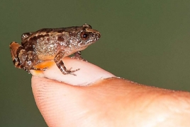 Scientists discover four miniature night frogs in India