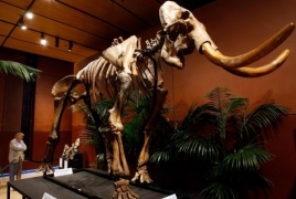 Woolly mammoths suffered genetic mutation before extinction