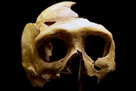 400,000 year-old half-skull points to ancestor of Neanderthals