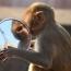 Молекулярные биологи из США вырастили первых в мире обезьян с иммунитетом к ВИЧ
