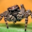 Study finds spiders consume 800 million tons of prey every year