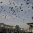 США почти взяли на себя ответственность за авиаудар по мирным жителям Мосула