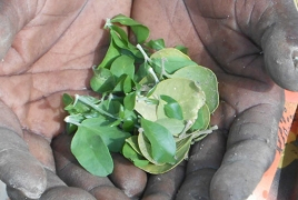 South Sudanese surviving on 'barely edible' tree leaves: Norwegian NGO