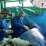 Ֆրանսիայից բժիշկներն Արցախում անվճար վիրահատություններ են անում