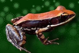 Ученые нашли в лягушачьей слизи способные бороться с гриппом вещества