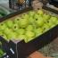 ՊԵԿ-ը՝ ադրբեջանական խնձորի մասին. Մաքսանենգության փաստը դեռ հաստատված չէ