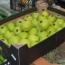 ՍԱՊԾ. Երևանյան սուպերմարկետներում ևս ադրբեջանական խնձոր է հայտնաբերվել