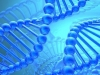 'Smart genes' account for 20% of intelligence: study