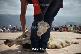 В Татеве постригли овец: В фестивале участвовало более 2.000 человек