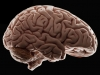 Forgetting actually makes you smarter, study suggests