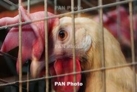 Во Франции обнаружили очаг птичьего гриппа