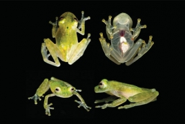 Frogs flourished after dinosaurs croaked, new study reveals